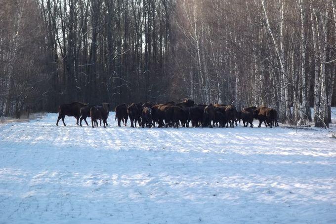 На Сумщине проанализировали численность охотничьих животных